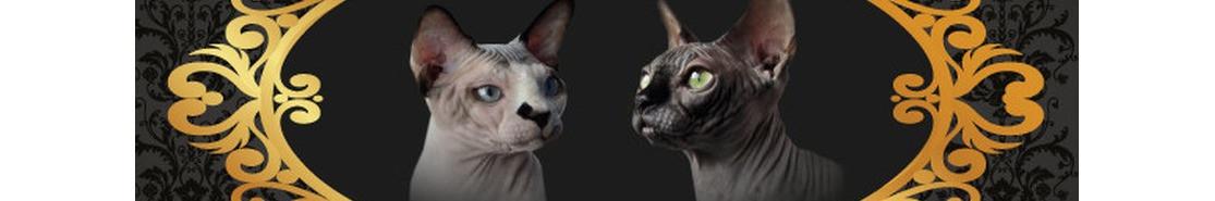 Gatos sphynx o  gatos sin pelo